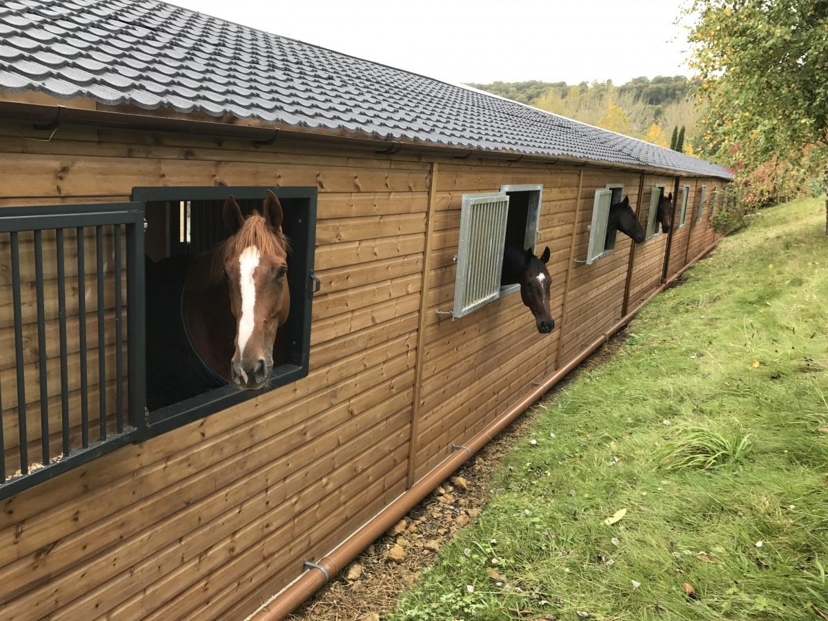 Grille Windows Hancox Equestrian